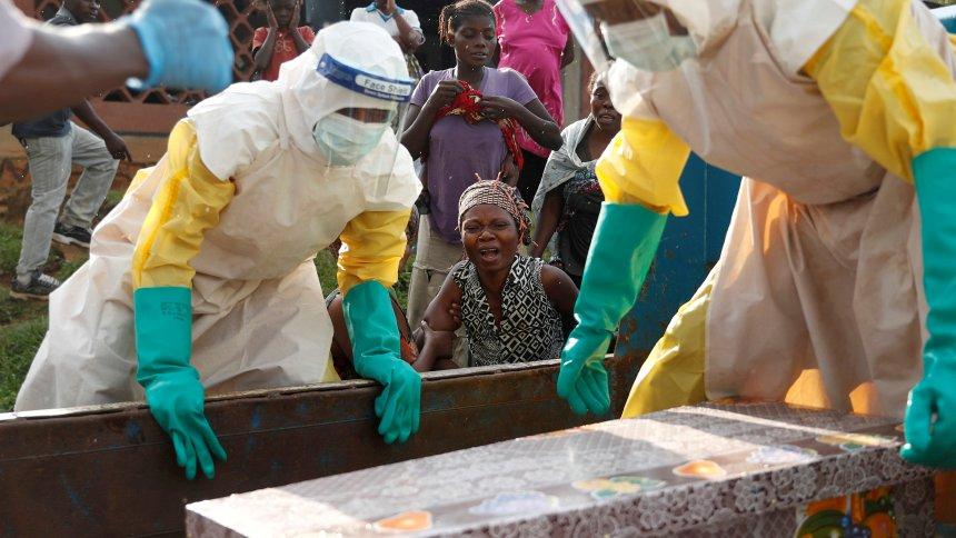 Ebola virus found in bat in Liberia